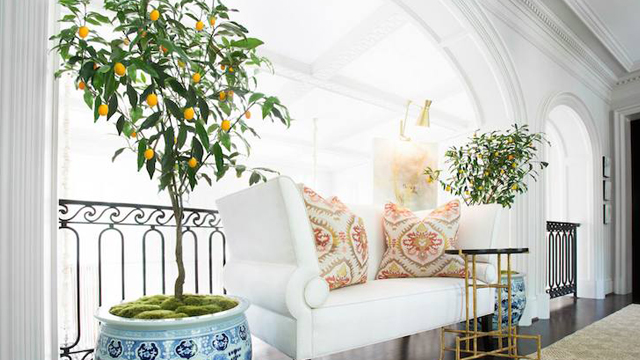 Dekorasi-Rumah-dengan-8-Pohon-Hias-Indoor-Terbaik-pohon-jeruk