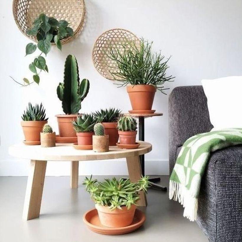 5-Jenis-Tanaman-Indoor-Terbaik-di-Dalam-Rumah-kaktus