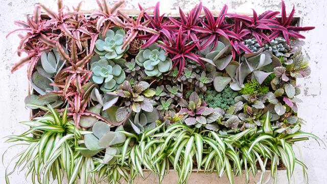 Panduan-Utama-Dalam-Membuat-Dinding-Hidup-tanaman