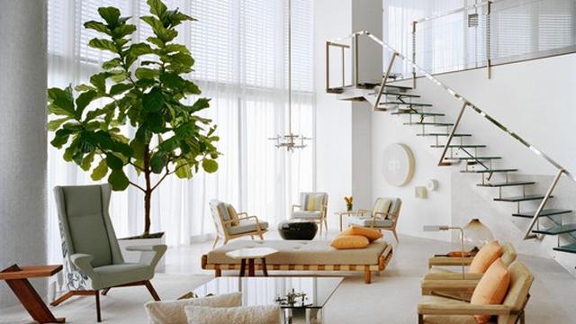 Dekorasi-Rumah-dengan-8-Pohon-Hias-Indoor-Terbaik