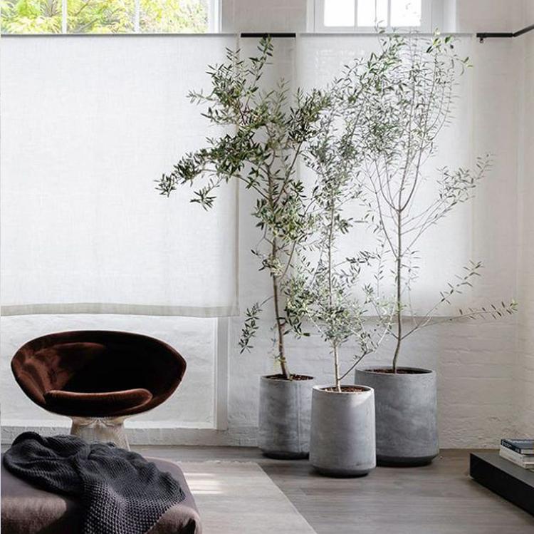 Dekorasi-Rumah-dengan-8-Pohon-Hias-Indoor-Terbaik-bambu
