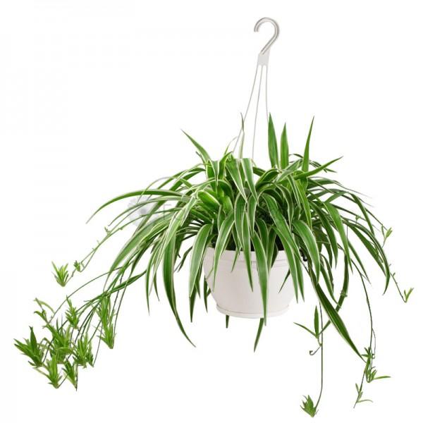 Dapatkan-Tidur-Lebih-Nyenyak-Dengan-6-Tanaman-Hias-Berikut-Ini-lily