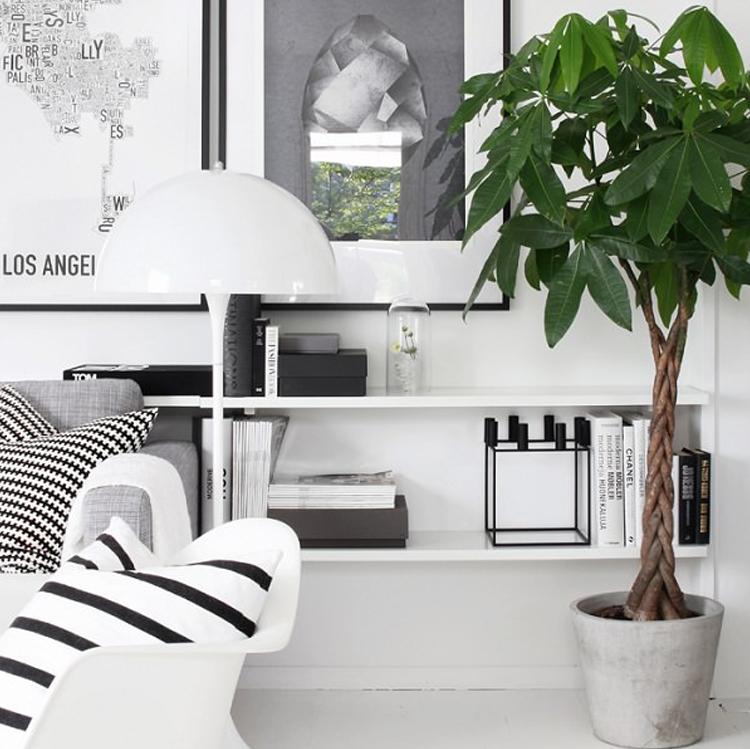 Dekorasi-Rumah-dengan-8-Pohon-Hias-Indoor-Terbaikpohon uang